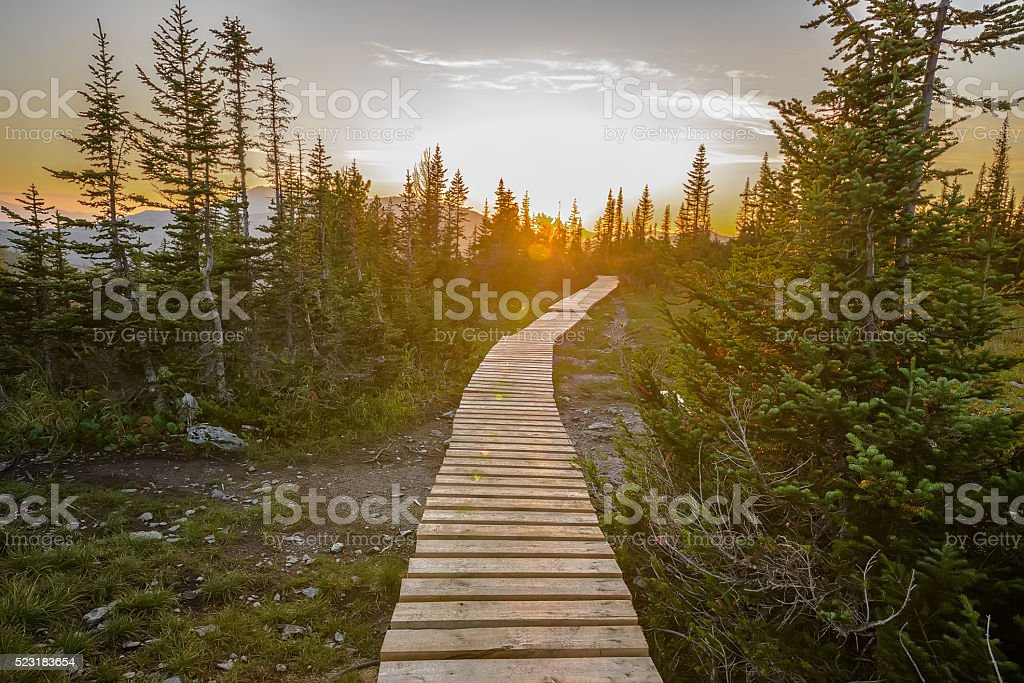 pathway in green forest stock photo