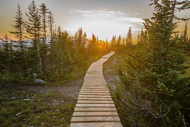 Caminho na floresta verde - foto de acervo