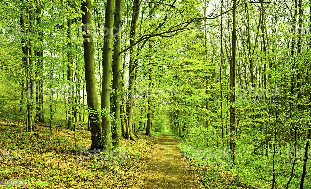 pathway in the forest royalty-free stock photo