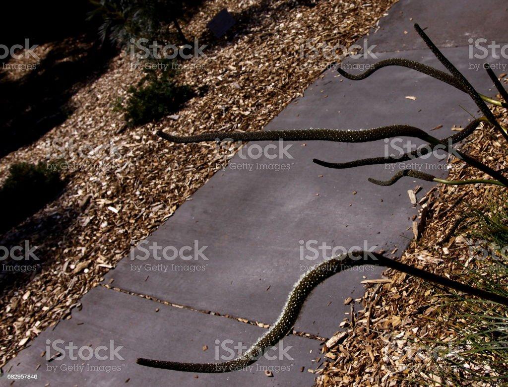 Pathway in the garden foto de stock royalty-free