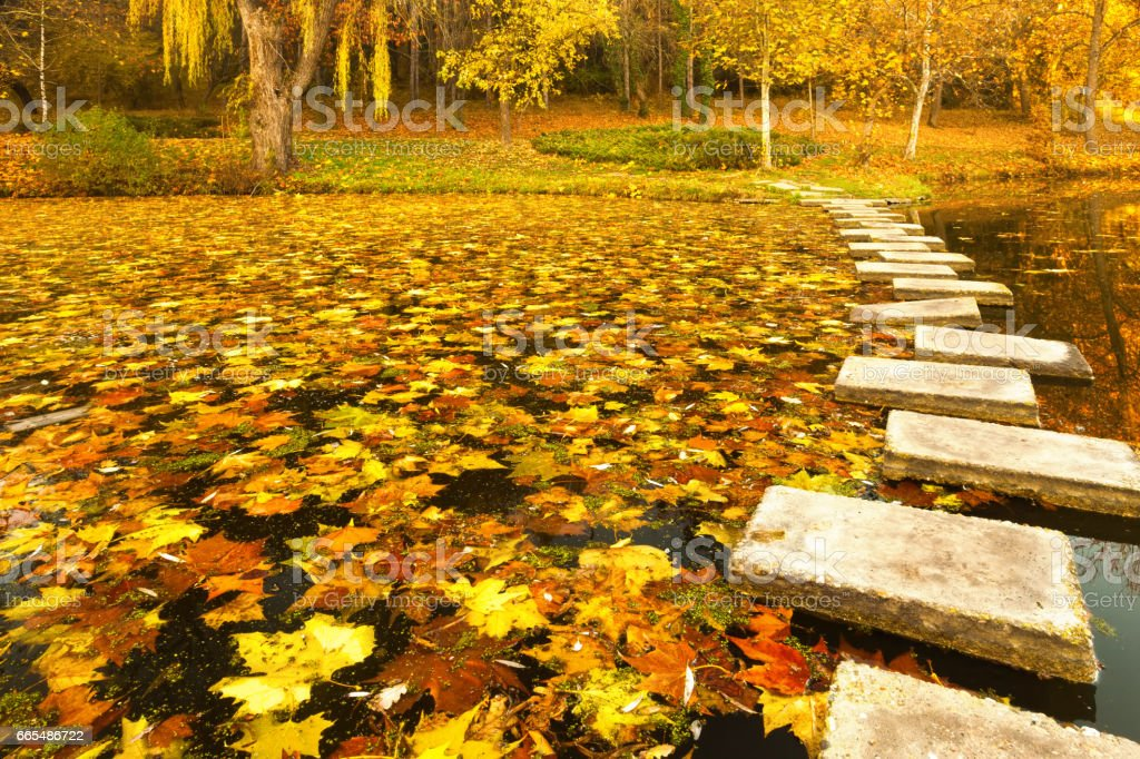 Pathway in the lake stock photo