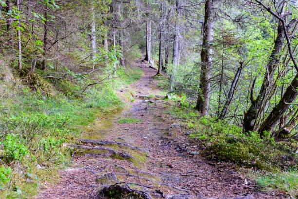 Pfad im Wald – Foto