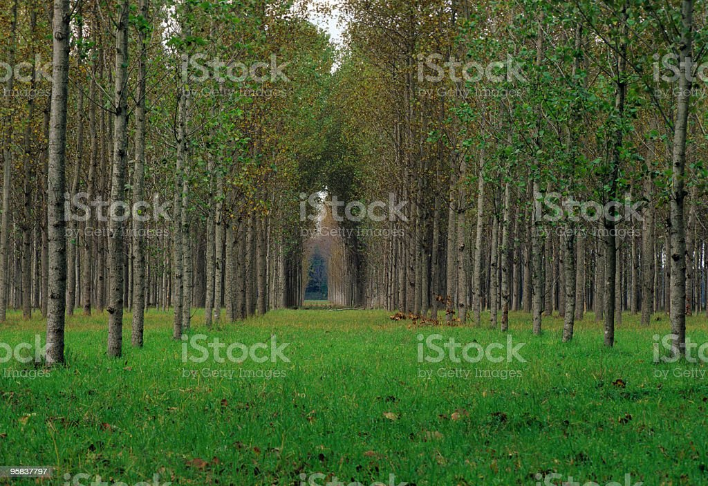 Pathway in the Woods royalty-free stock photo