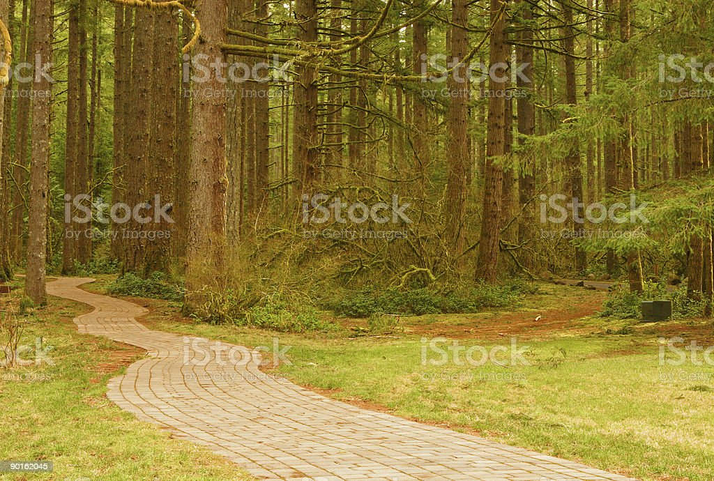 Pathway into the Forest stock photo