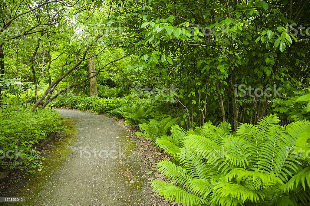 Pathway Lined with Ferns royalty-free stock photo