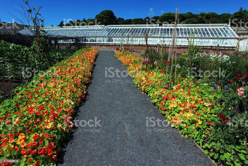Pathway Of Flowers stock photo