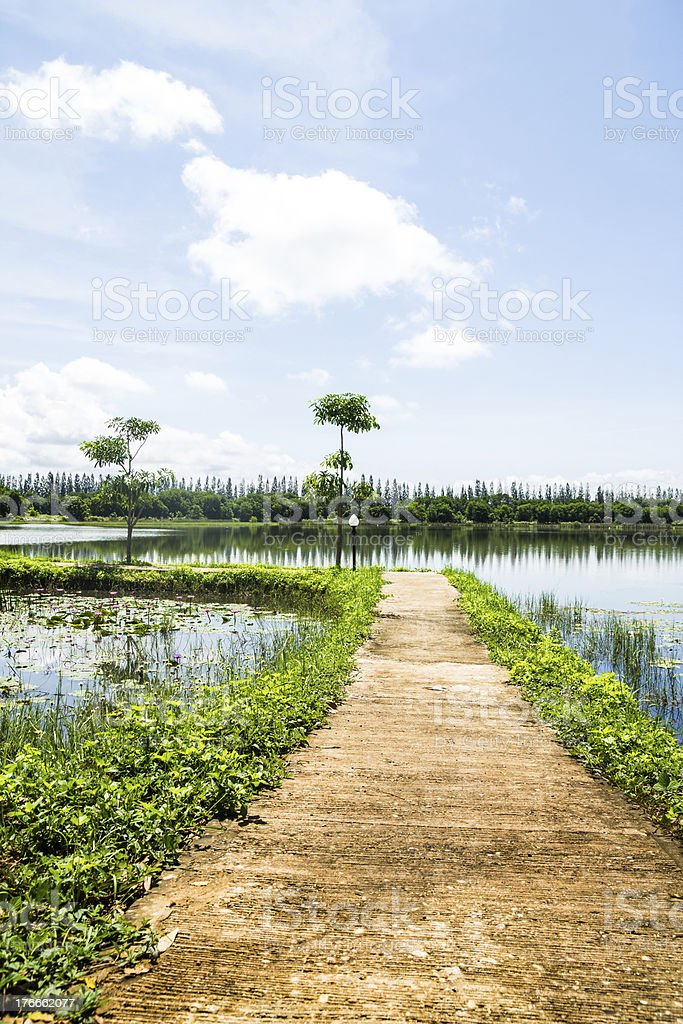 Pathway on lotus pond royalty-free stock photo
