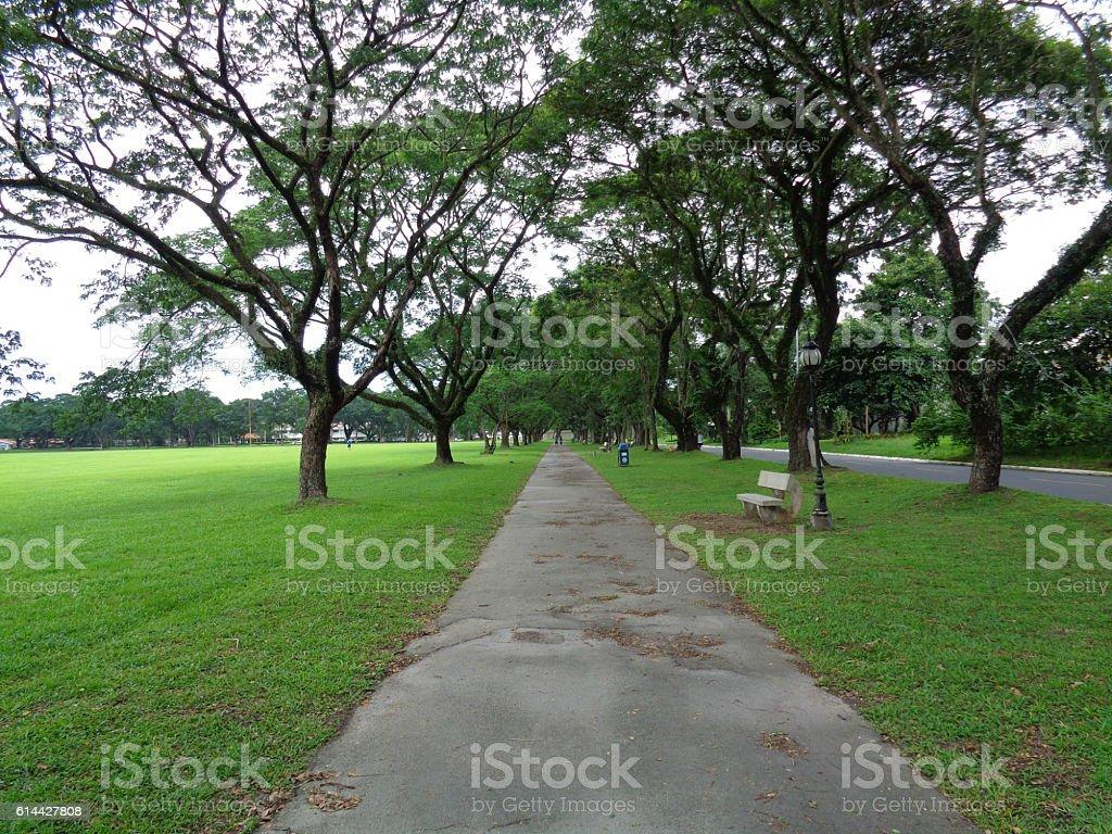 Pathway stock photo