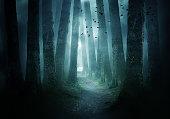 istock Pathway Through A Dark Forest 1035213106