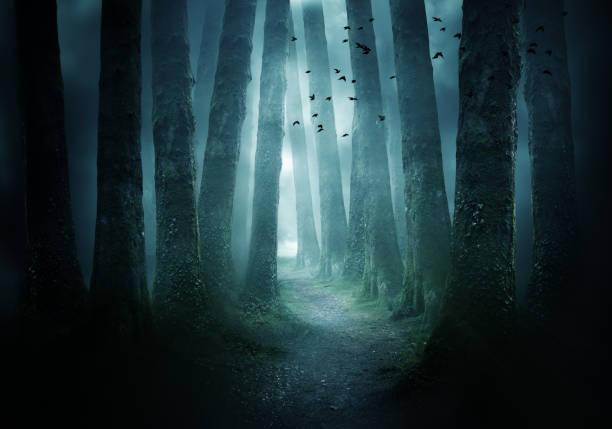 ścieżka przez ciemny las - upiorny zdjęcia i obrazy z banku zdjęć