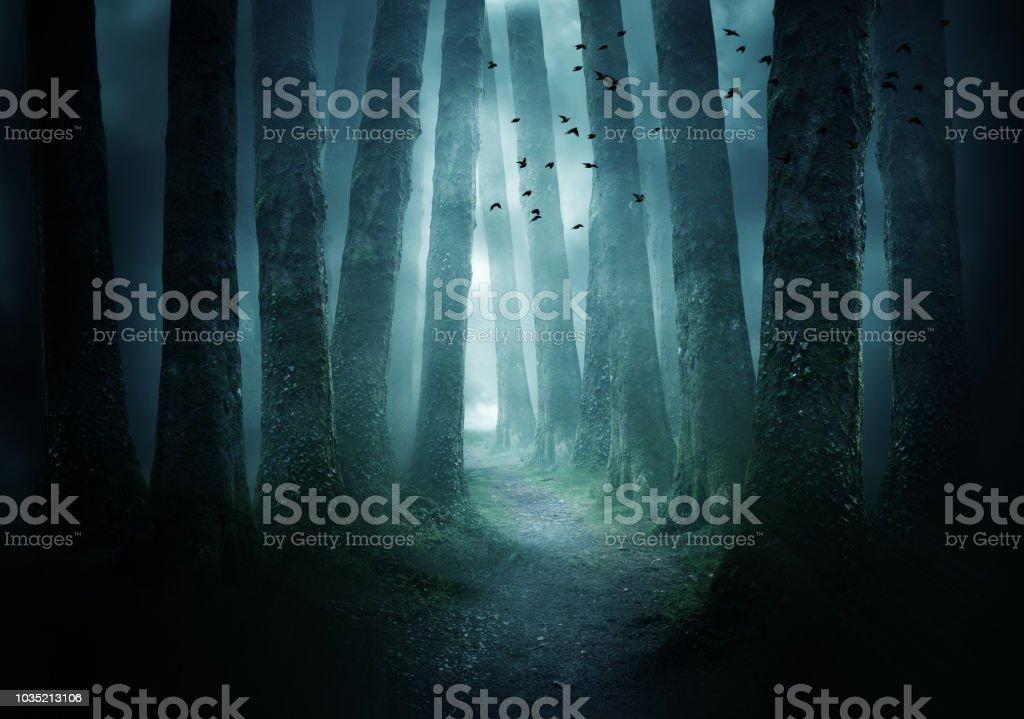 Weg durch einen dunklen Wald – Foto