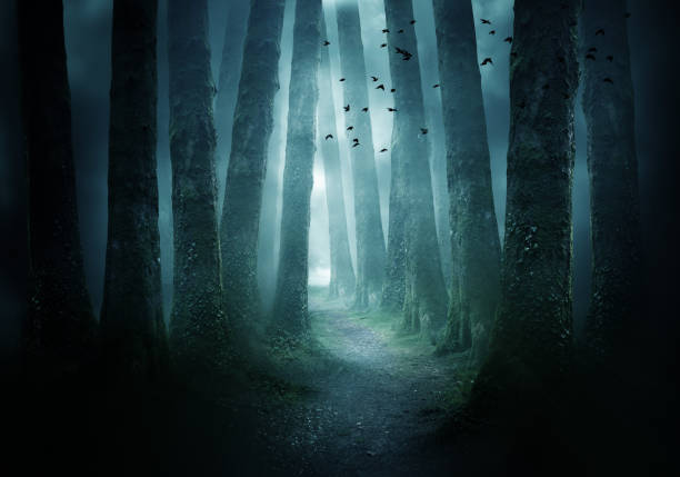 Pathway Through A Dark Forest A pathway between trees leading into a dark and misty forest. Photo Composite. forest stock pictures, royalty-free photos & images