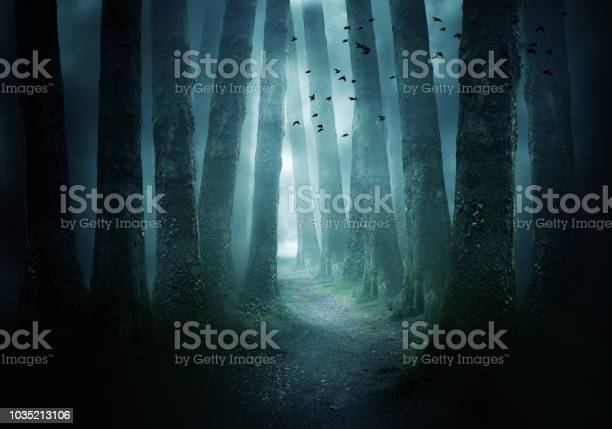 Photo of Pathway Through A Dark Forest