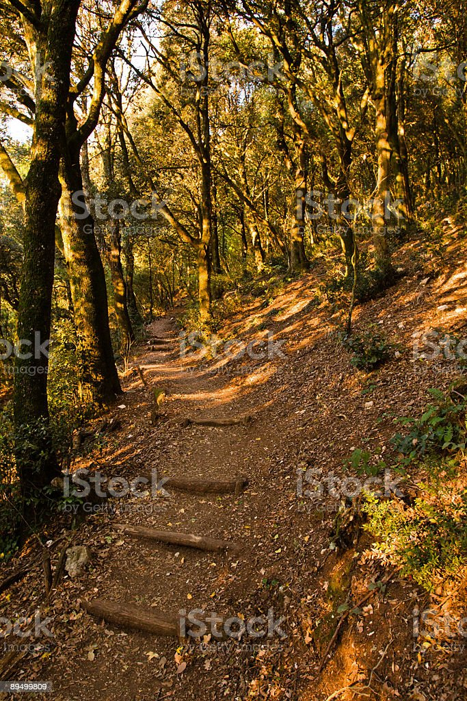 Pathway through a mountain forest royalty free stockfoto