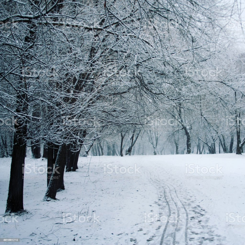 Pathway through a winter park. Aged photo. stock photo
