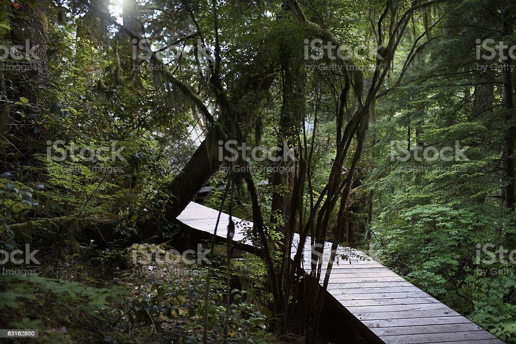 Pathway through forest. royaltyfri bildbanksbilder