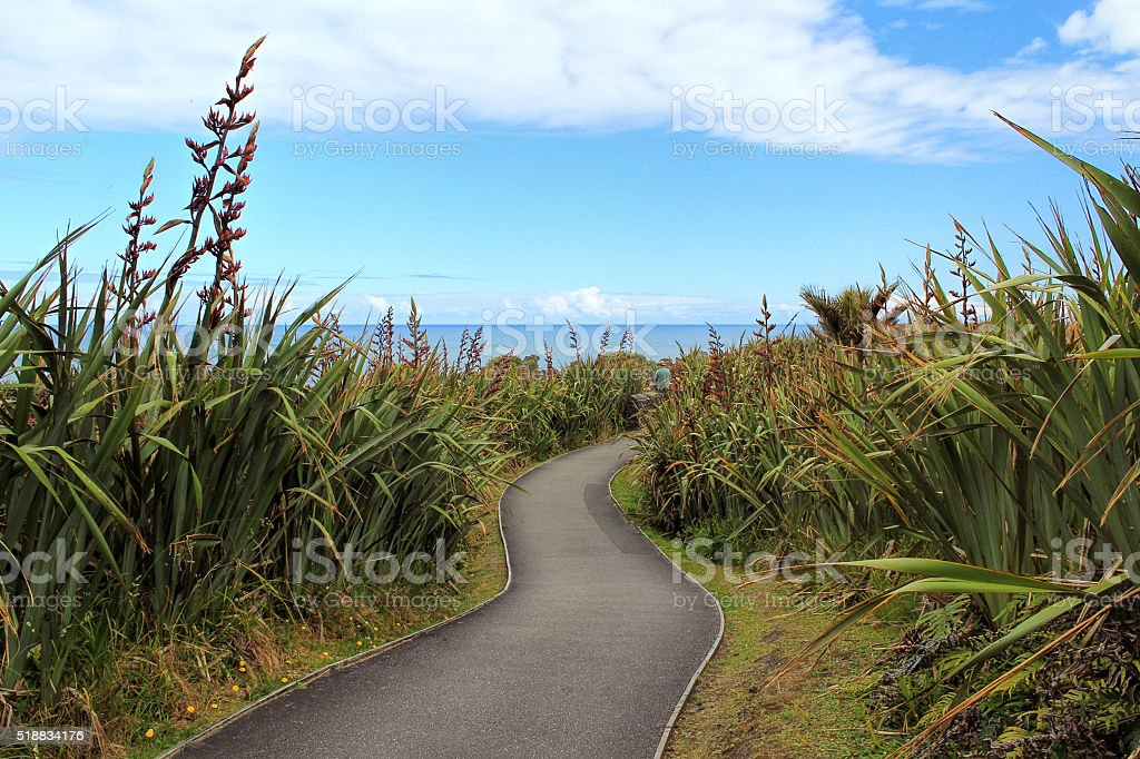 Pathway through spiny spaniards in Greymouth, New Zealand stock photo