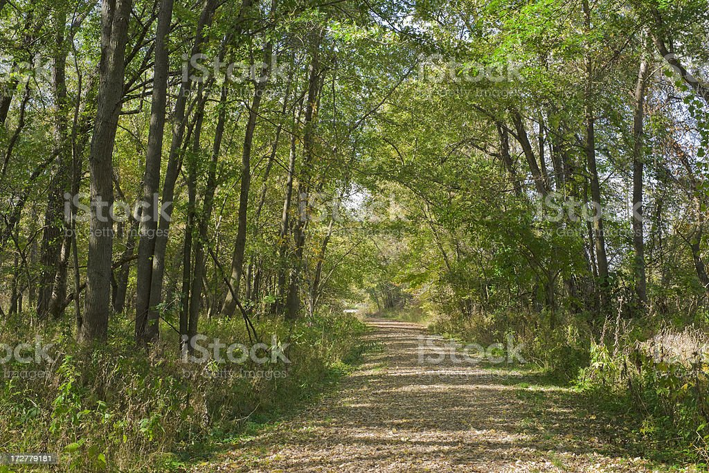 pathway through summer forest royalty-free stock photo