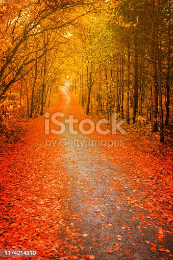 Pathway through the autumn forest, orange and red foliage trees. blur, soft focus.
