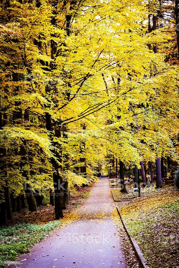 Pathway through the cemetery on autumn stock photo