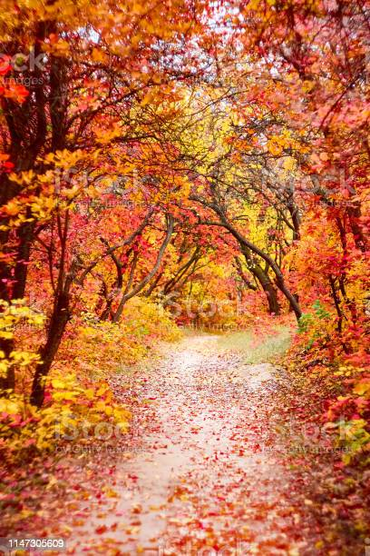 Photo of Pathway throught the autumn trees. Autumn park with red and yellow leaves on the bushes.