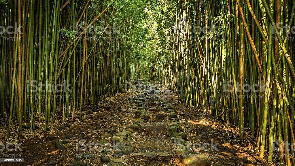Pathway thru Bamboo Forest stock photo