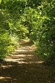 This sunny pathway thru Fridaywoods Colchester
