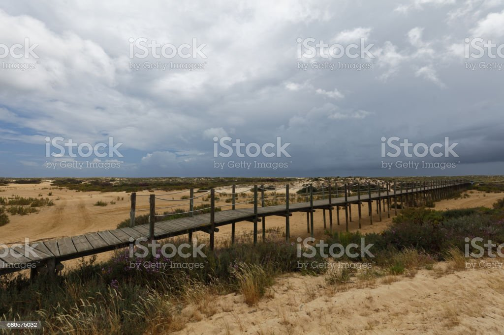 Pathway to the beach on Culatra Island in Ria Formosa, Portugal royalty-free stock photo