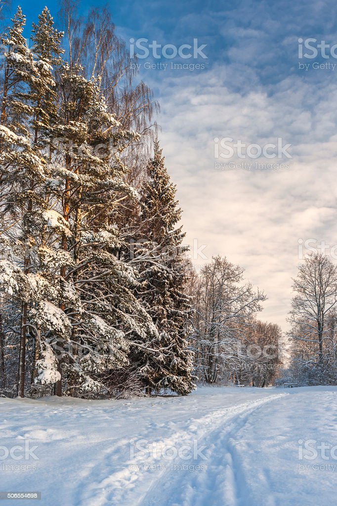 Pathway to winter forest stock photo
