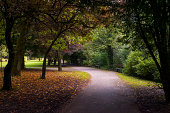 Pathway covered by trees in a park near Buxton England