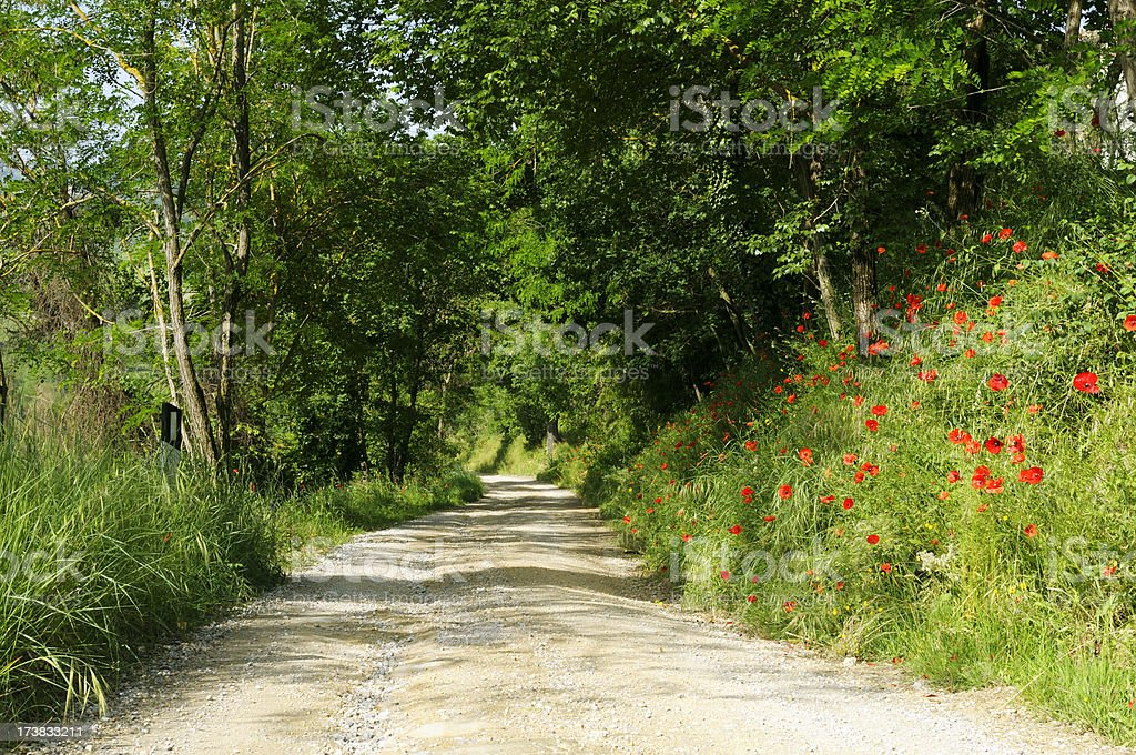 Pathway with Poppies in the Woods royalty-free stock photo