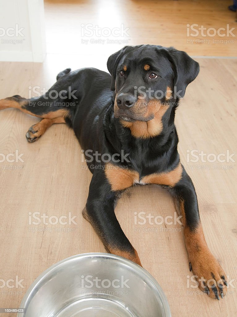 Patience. royalty-free stock photo