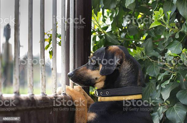 Patient dog picture id486500987?b=1&k=6&m=486500987&s=612x612&h=weh8xezd7ce7oxqraos1xv lvsdepjwdrnnivz zzsi=