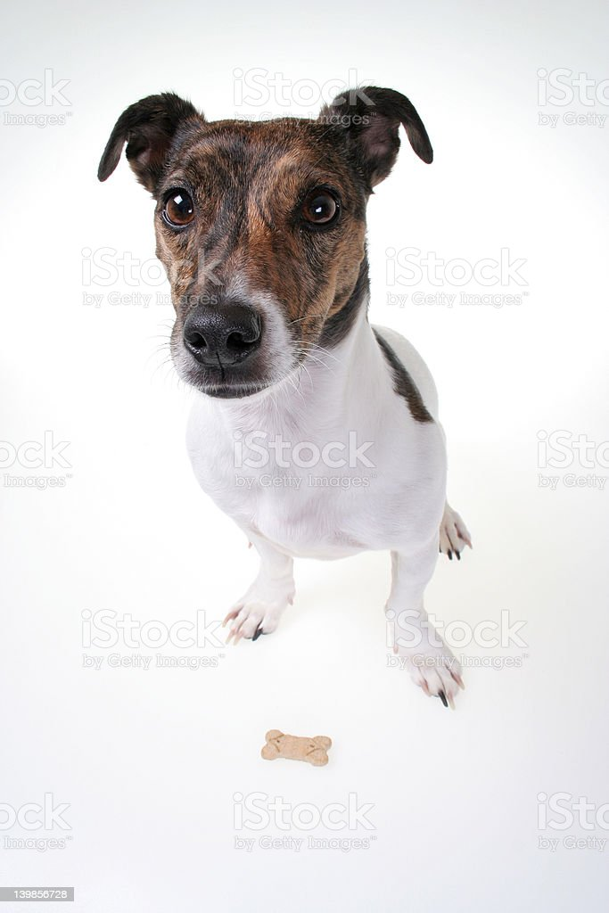 Patient Jack royalty-free stock photo