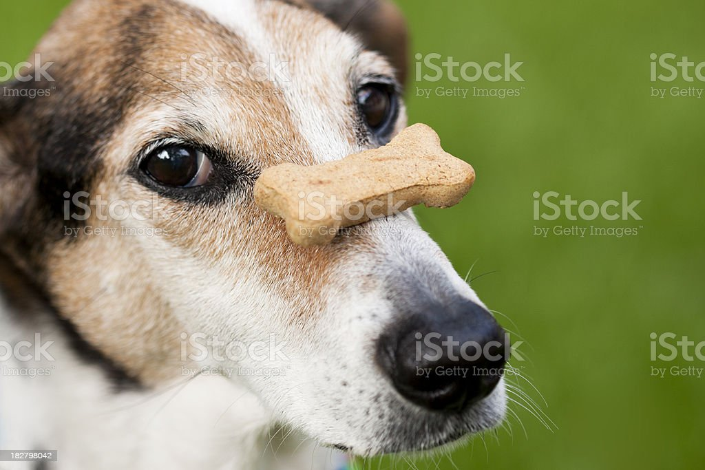 Patient Pup royalty-free stock photo