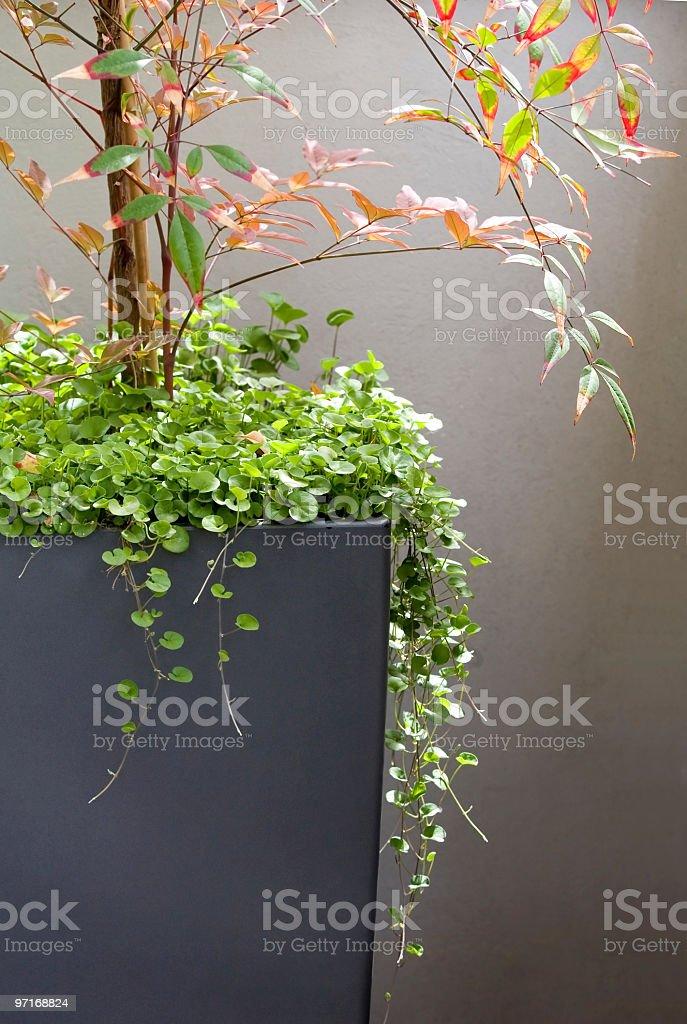 Patio container stock photo