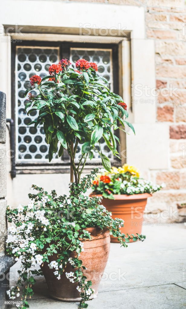 Patio flowers pots with various plants and flowers, container...
