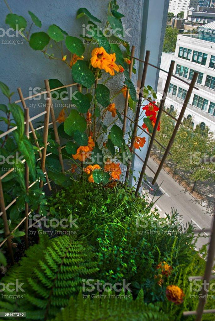 Patio garden stock photo