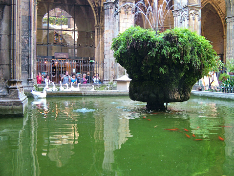 Patio of the Cathedral in Barcelona, Spain