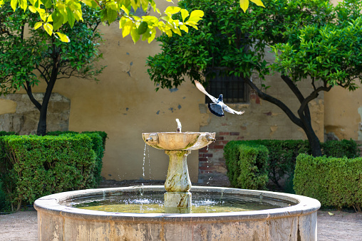Patio with fountain and birds