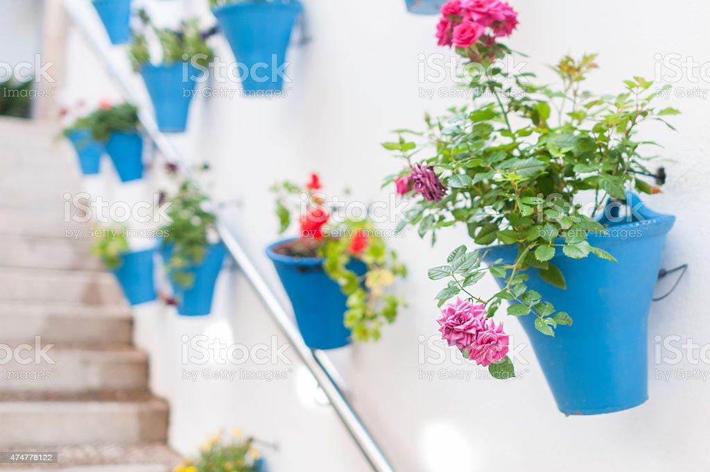 Patios flowers stock photo