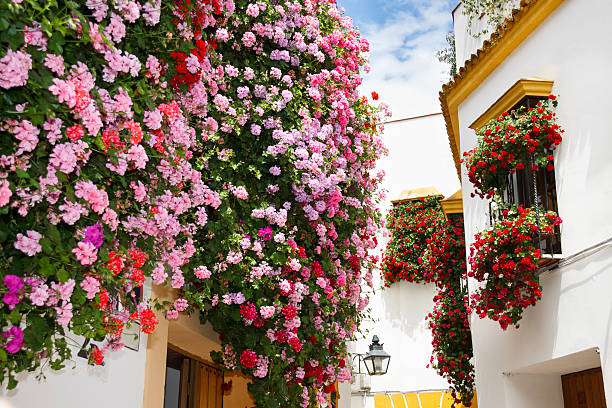 Patios de Cordoba A very beautiful street at the old town of Cordoba. The balconies and the windows of the flowers are decorated with flowers for the the popular festival called Patios de Cordoba which is organized every year during May. cordoba spain stock pictures, royalty-free photos & images