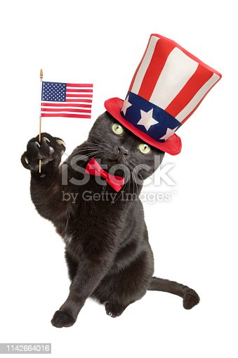490776989 istock photo Patriotic American Black Cat 1142664016