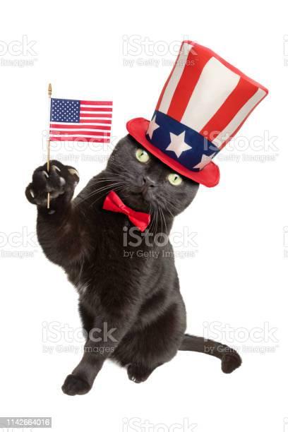 Patriotic american black cat picture id1142664016?b=1&k=6&m=1142664016&s=612x612&h=szcyjnlxtu45rg4uj ctd7hzvved fdxwkf8ulyr2y0=
