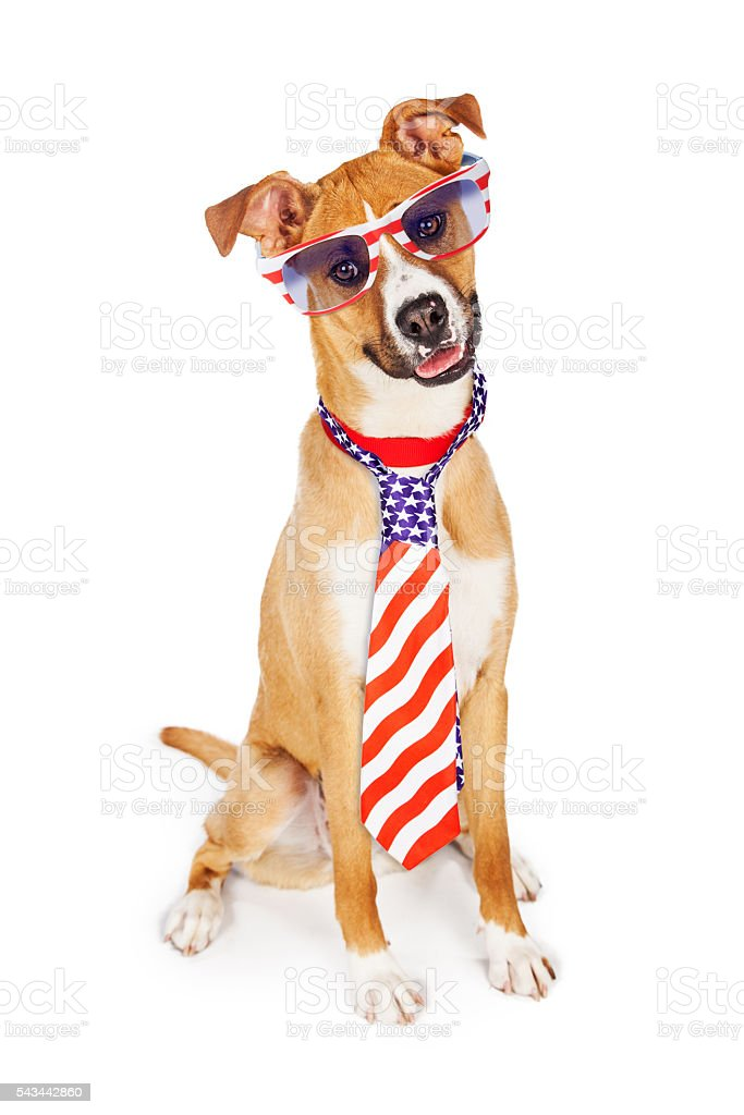Patriotic American Dog Wearing Tie and Glasses stock photo