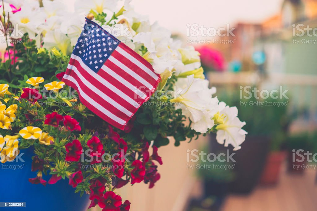 Patriotic American flag background with vibrant petunias stock photo