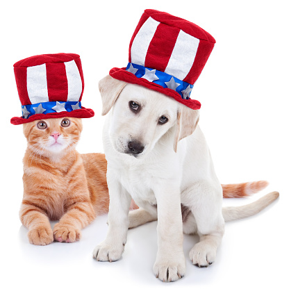 Patriotic happy American pet kitten cat and puppy dog animals wearing red white and blue Uncle Sam flag hat for July 4th, fourth, 4, USA election vote, Memorial, Independence, Labor and Presidents Day