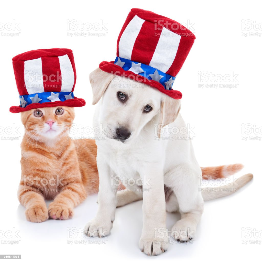Patriotic American Pet Dog and Cat for July 4th and Memorial Day stock photo
