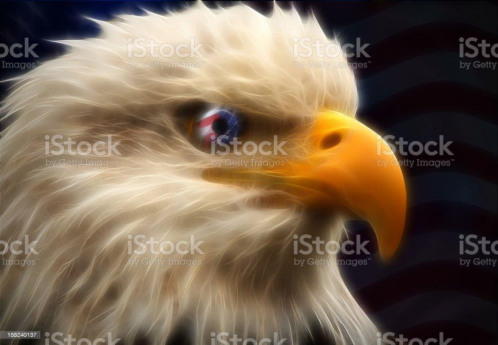 Patriotic Bald Eagle XL stock photo