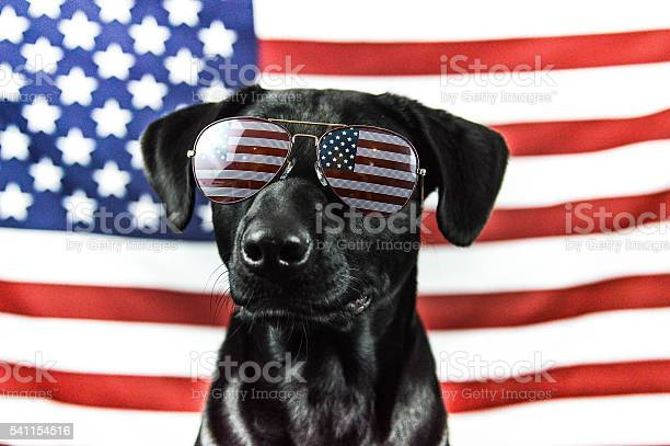 Patriotic black lab picture id541154516?b=1&k=6&m=541154516&s=612x612&h=f 4dsyxdhg4a9v53ucxb vvjqnnrfidzu67tx zuubu=